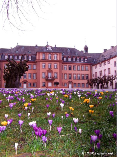 Schloss Wittgenstein in the spring