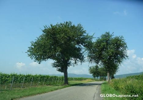 Driving to the Alsace