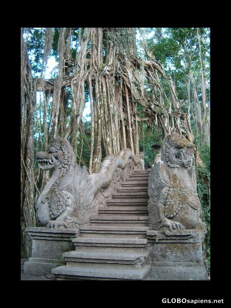 Dragon balustrade in the jungle