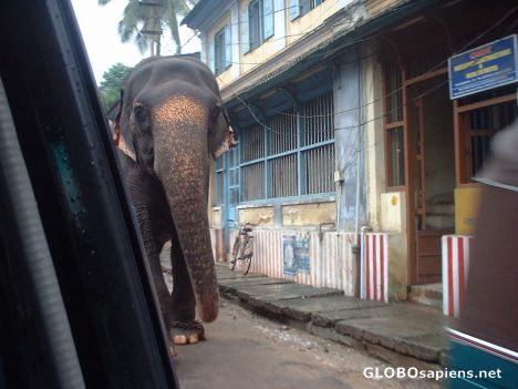 A close encounter with an elephant in a street