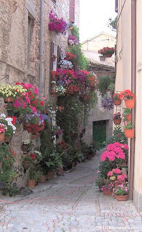 Colourful flowers, Spello