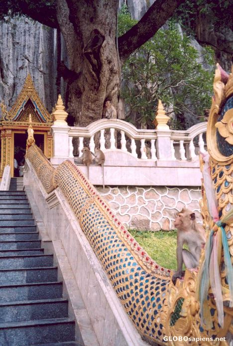 Phetchaburi Thailand  City new picture : Phetchaburi Thailand Monkeys at Tham Khao Luang Cave GLOBOsapiens