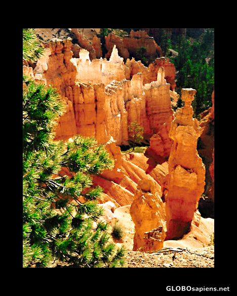 Another view of Bryce Canyon National Park Utah