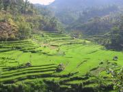 The mother of all rice terraces