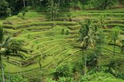 Small Rice Terraces