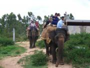 Elephant rides at the Bannerghetta national park