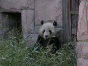 China loves their Panda's. But treats all their other animals like crap. Don't go to the zoo.