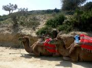 Camel ride in the hills