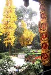 Taoist Temple, pretty yellow trees and gold posts