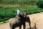 No trip is complete without an elephant trek