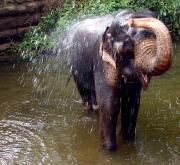 At Habarana I came across this lovely elephant bathing in the river