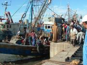 Unloading the Catch Essaouira