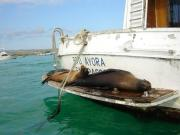 Galapagos travelogue picture