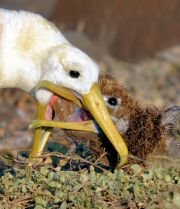 Mother is feeding her baby