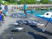 Selling fish on the ground. One kilo tuna per 10 rufiyaa