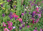 More of Monet's garden colours.