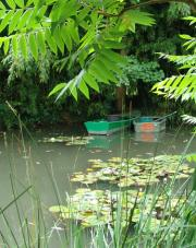 Boats on the pond - another picture