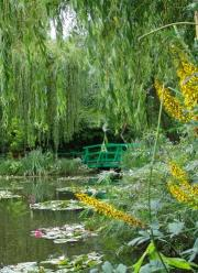 Japanese bridge, willows, lillies - heaven!