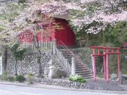 A Shinto shrine surrounded by cherry blossoms on Ikuno's back streets.