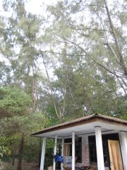 The cabin I stayed in, the sturdiest one avail. on the island.