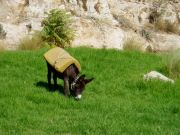 Riderless donkey at the surprisingly green edge of the Old City