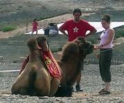 Feeding My Camel & Conor going