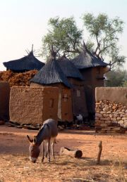 Ennde - granaries at the back and the donkey, the main workforce and transport in the country