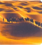 Even in the XXI century there are camel caravans in Xinjiang