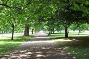 a beautiful day in hyde park.  take off your shoes, lie under a tree and read a book.