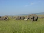 Masai Mara travelogue picture