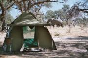 Elefant crossing near by our tent in Moremi game reserve