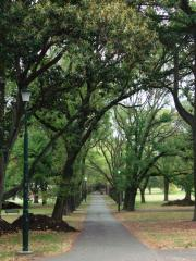 fawkner park is one of my favourite places to walk. also easy way to get back to st kilda from toora