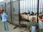 At the Coast Guard Station, you can get very close to the sea lions (but don't touch).