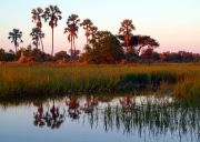 Okavango Delta travelogue picture