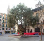 Tree in Placa Cort