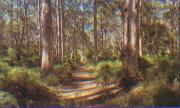 Rugged Australian Natural Forest