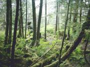 Temperate Rainforest along a trail