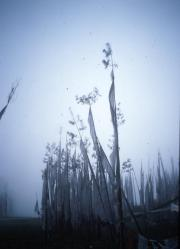 Bhutan, betwen Wangdue Phrobang, Prayer flags in Fog