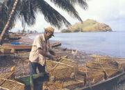 Dominican fisherman prepares the traps