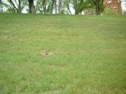 My attempt to photograph a prairie dog.