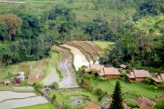 Bali's terraces with rice paddies.