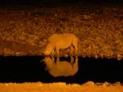 Night viewing at the watering hole