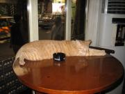 The Infamous Bar Cat curled around a Guiness ashtray.