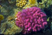 marine life at the red sea
