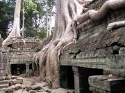 The atmospheric Ta Prohm that was featured in Tomb Raiders.