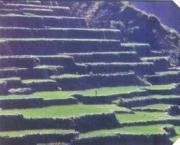 Rice terraces north of Baguio