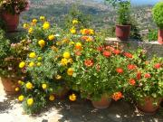 Flowers at Lappa