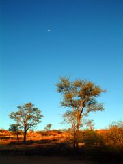 A perfect hangout on the Kalahari