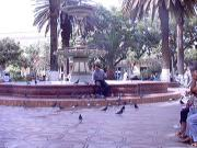 A man feeding the pigeons in the main plaza