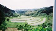 Terraced rice farming near Tateyama